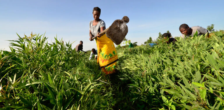 Security collapse in rural food producing states threatens Nigeria's farmers as food scarcity looms, inflation spikes