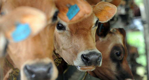 FAO raises concern over rising purchase of antibiotics for animals, plants without expert prescription