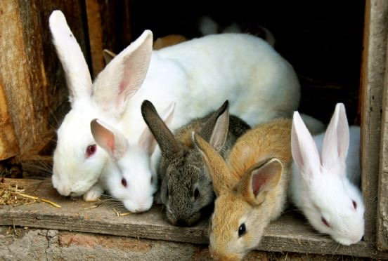 Curbing Rabbit Hemorrhagic Disease: Ogun Govt. pledges support for farmers