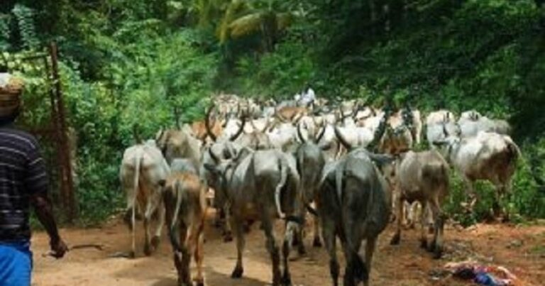 Farmers/herders' conflict: 10 states ready to implement national livestock transformation plan — Presidency