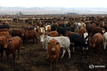 16 Nigerian states to benefit from N95bn World Bank Livestock project