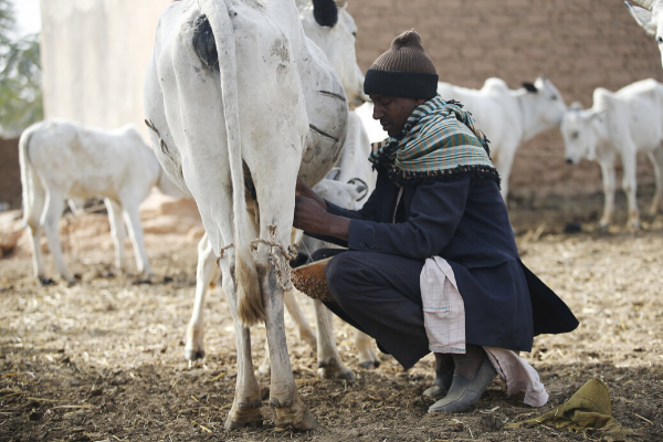 FG restates commitment to boost productivity of Dairy sector, designs policy document